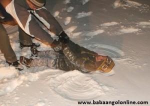 Baba angol a hóban