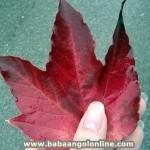 10 őszi játékötlet angolozáshoz